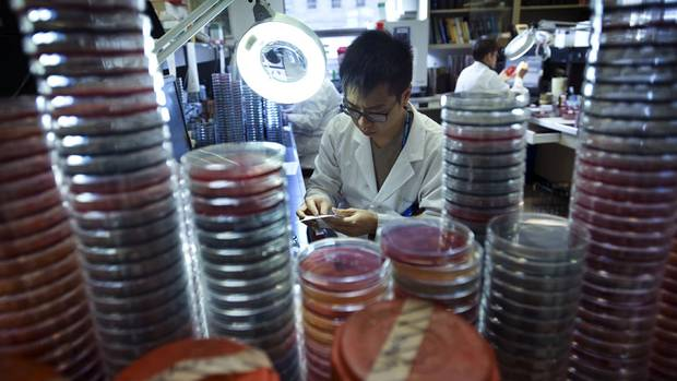 Lab technologist Derek Chau tests the sensitivity of various antibiotics in the microbiology lab at Sunnybrook Health Sciences Centre in Toronto, Ontario Thursday, November 28, 2013. (Kevin Van Paassen/The Globe and Mail)