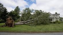 A large uprooted tree rests against a house in Oakland, N.S., July 5, 2014, after post-tropical storm Arthur battered the region. (ANDREW VAUGHAN/THE CANADIAN PRESS)