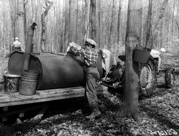 Emptying sap into tank wagon, 1956.
