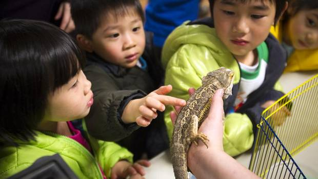 Amanada Shui, left to right, Ethan Qiu, Alvin Shui and Karissa Qiu play with a bearded dragon during an exotic reptiles show at the Richmond Nature Park in Richmond, B.C., on March 24, 2013. (Ben Nelms for The Globe and Mail)