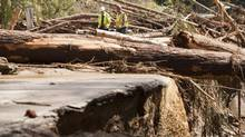 Ministry of Transportation workers examine a large pile of debris of trees have taken out the bridge and road on Mable Lake Road along with power lines some 25 kilometres east of Enderby, B.C. on Friday, May 2, 2014. (Jeff Bassett/THE CANADIAN PRESS)
