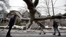Pedestrians pass a fallen tree in Toronto on Dec. 21, 2013 after a devastating ice stor (Deborah Ba/The Globe and Ma)