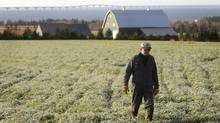 Farmer Reg Hamill walks through his frost covered field near Borden-Carleton, PEI as the Confederation Bridge looms in the background, in this 2009 file photo. (Kevin Van Paassen / The Globe and Mail/Kevin Van Paassen / The Globe and Mail)