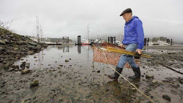 Ross O'Connell carries plastic fencing and scrap wood that he cleaned up during the Surfrider Pacific Rim Christmas Jingle Cleanup Event along the Tofino harbour shorefront near the 4th Street government dock and marina on Dec. 2, 2016.