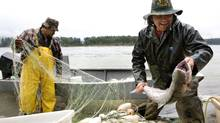 Cheam First Nations fishermen Isaac Aleck(L)brother Tony Aleck(R) unload their catch after drift net fishing for chinook on the Fraser River August 19, 2007 in Agassiz, BC. (Rafal Gerszak / The Globe and Mail/Rafal Gerszak / The Globe and Mail)