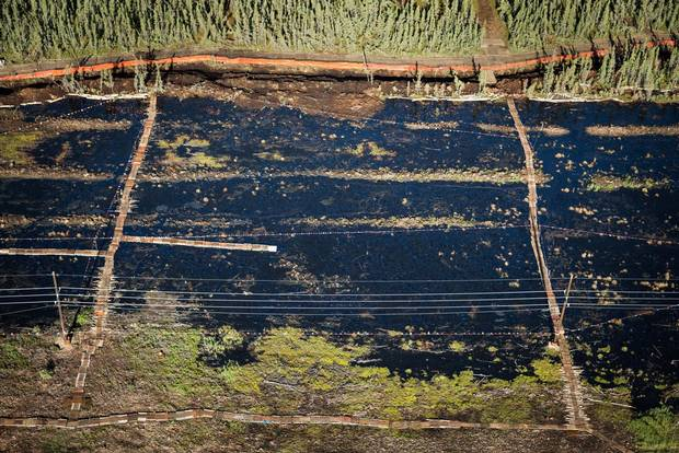 The site where a July 2015 oil spill by the Nexen corporation left five million litres of oil covering an area of forest and muskeg the size of three football fields, as seen on August 8, 2015.