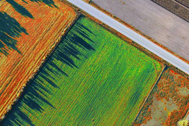 Anomaly graphics for potato field highlighting different problem areas