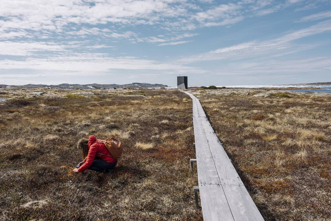 Golding studying mosses near a nartist studio owned by Fogo Island Inn on Fogo Island, Newfoundland.