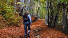 walking in the woods image belongs here