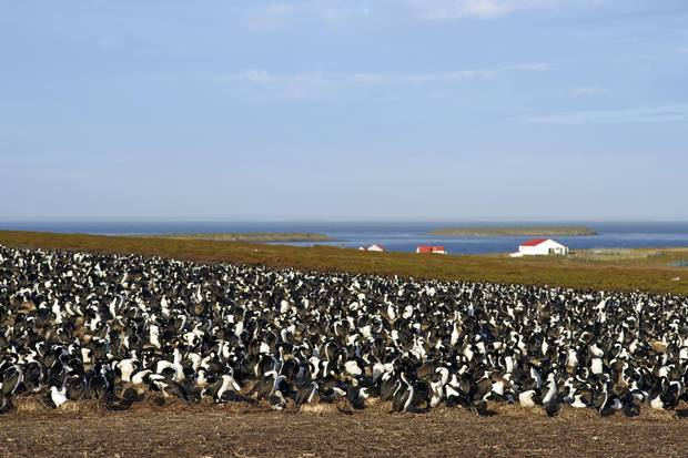 Bleaker Island is home to a variety of animals, including shy penguins, roaring seal lions and sunbathing fur seals.