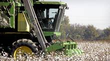 A cotton picker harvests the field on BTC farm October 19, 2003 near Clarksdale Mississippi. BTC raises 1000 acres of cotton, 80% of which is genetically modified (GM) Bt, Roundup Ready cotton. (Scott Olson/Getty Images/Scott Olson/Getty Images)