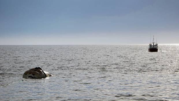 A ship tows a dead whale near Norway, PEI.