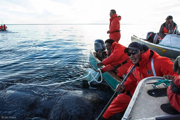 The first series episode, co-directed by Carol Kunnuk, documents a bowhead-whale hunt that took place in the summer of 2016.
