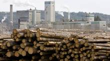 Logs are piled up at West Fraser Timber in Quesnel, B.C., Tuesday, April 21, 2009. (JONATHAN HAYWARD/THE CANADIAN PRESS)