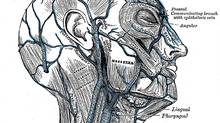 Views of the neck. 20th U.S. edition of Gray's Anatomy of the Human Body, originally published in 1918.