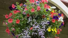 Hanging basket. (Thinkstock)