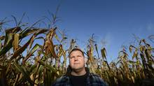 Henry Van Ankum and other corn growers are concerned about the low prices their crops will fetch when they begin harvesting. (Fred Lum/The Globe and Mail)