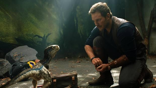 Chris Pratt with a baby Velociraptor in Jurassic World: Fallen Kingdom.