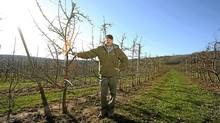 Apple grower John Eisses, president of Fruit Growers Association of Nova Scotia, in his orchard near Centreville, Nova Scotia on April 19 , 2012. He employs mainly Newfoundlanders to help pick his apples. (Paul Darrow/THE GLOBE AND MAIL)