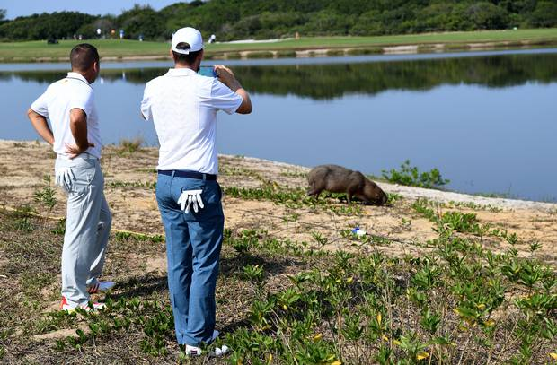 Sergio Garcia of Spain and Bernd Wiesberger of Austria take photos of a capybara on the 5th hole during a practice at the Olympic Golf Course in Rio de Janeiro on August 9, 2016.