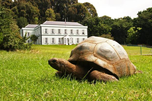 A 185-year-old giant tortoise called Jonathan who likes his thighs tickled is just one of the many wonders of the island.