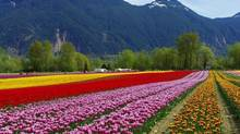 Now in its ninth year, Tulips of the Valley boasts 14 hectares of fields that are covered in more than 20 varieties of vibrant blooms.