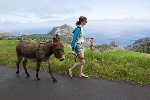 Visitors can wander around the island with rescue donkeys.