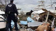 New York City Police Emergency Service K9 Unit officer Chris Theofield (L) and his partner search dog Brutas search for possible victims bodies amid boats and debris washed ashore by Hurricane Sandy on the south side of the Staten Island section of New York City. (MIKE SEGAR/REUTERS)