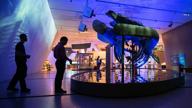 Security staff install motion detectors below the blue whale skeleton as the final touches are made on the exhibition.