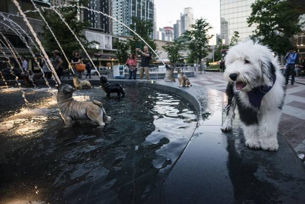 Pixel, an old English Shepherd, checks out the dog fountains at Berczy Park near Front and Church streets.