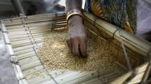 Woman sifts through wheat, picking out grit and dirt outside of a New Delhi shop seeling bulk wheat. Premium grain prices in New Delhi have increased more than 10 per cent in the last year. (Charla Jones/Charla Jones for The Globe and Mail)