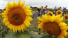 Sky Procycling rider and leader's yellow jersey Bradley Wiggins of Britain cycles past sunflowers (BOGDAN CRISTEL/REUTERS)