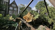 The chestnut tree that comforted Anne Frank while she hid from the Nazis during the Second World War is seen after it fell over during a storm in Amsterdam. (Peter Dejong/AP)