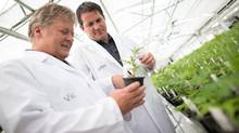 Vic Neufeld, left, CEO of Aphria, and co-chair John Cervini, inspect marijuana plants at their Leamington, Ont., greenhouse. (GEOFF ROBINS for The Globe and Mail)