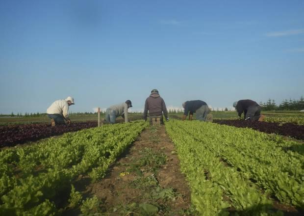Farmers tend the field on Brent Preston's farm near Shelburne, Ont.