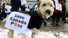 Billie the dog walks along with about 2,000 people march through the streets in support of the Canadian Union of Postal Workers, who rallied outside Prime Minister Stephen Harper's office below Parliament Hill in Ottawa, Sunday January 26 2014. They were protesting against Canada Post's cuts of door-to-door mail delivery. (FRED CHARTRAND/THE CANADIAN PRESS)