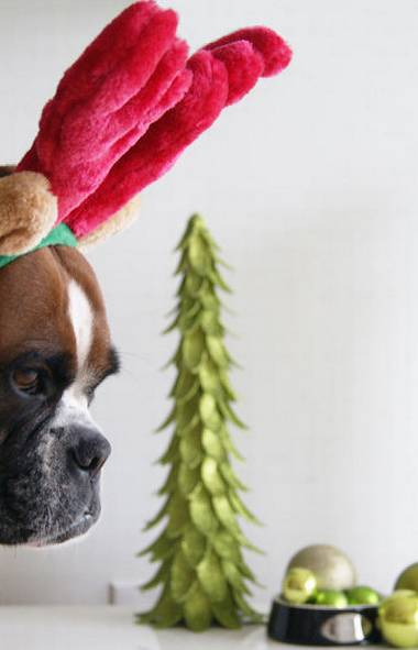 Ruby, an incredibly patient if mildly humilated boxer, models holiday antlers: $6.99 at Pet Valu. (Amberly McAteer/The Globe and Mail)