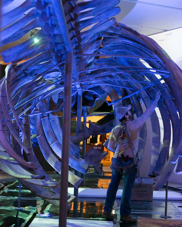 Darian Mayer checks the rib cage part way through the installation.