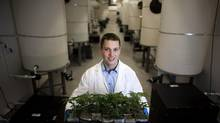James Poelzer, CEO of Agrima Botanicals, holds seedling marijuana plants at his medical marijuana production facility in Maple Ridge, B.C., Friday, January 10, 2014. (Rafal Gerszak for The Globe and Mail)