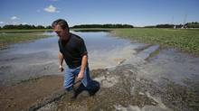 Doug Chorney, Manitoba farmer and president of the Keystone Agricultural Producers inspects one of his flooded fields of canola just outside Selkirk Thursday, July 3, 2014. (JOHN WOODS/GLOBE AND MAIL)