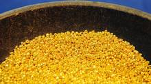 Gold granules at a gold and silver separating plant. A big problem for many analysts is the difficulty in determining whether gold is actually cheap. (HEINZ-PETER BADER/REUTERS)