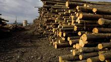 The large stock piles of wood at the Pope and Talbot sawmill in Grand Forks, B.C. on Nov. 6, 2007. (Jeff Bassett/The Canadian Press)