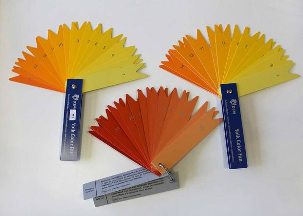 Producers gauge food colour of eggs and salmon by using one of DSMs fan decks, such as the YolkFan and the SalmoFan. Farmers adjust the colour of yolk or salmon by altering an additive in the food they feed their hens and fish.