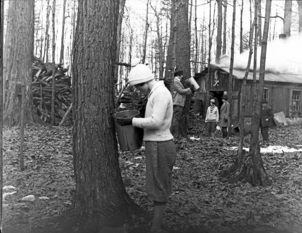 Collecting a bucket of maple sap in rural Ontario, 1926