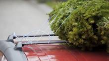The way many drivers strap their Christmas trees to the roof invariably means it won't be long until the fir flies. (Alexander Shaw/Getty Images/iStockphoto)