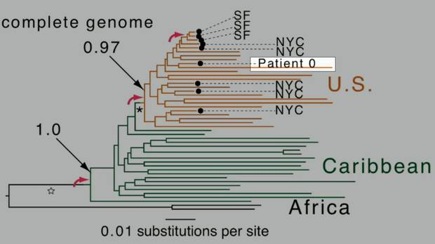 """A slide from a presentation by Professor Michael Worobey at the Conference on Retroviruses and Opportunistic Infections in Boston last month. The position of the so-called """"Patient Zero"""" in the genetic sequencing of the disease is highlighted."""