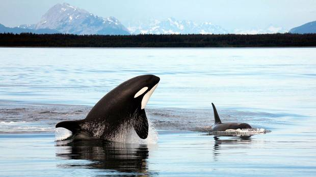 Southern Strait of Georgia: These well-trafficked waters that lie between Vancouver and Vancouver Island include crucial habitat for killer whales, sea lions, rockfish and about 3,000 other marine species.