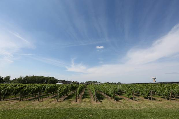 After a day of cycling, you might be tempted to eat dinner in Niagara Falls, but a better choice would be to stop at one of the region's wineries.