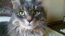 The author's cat, Emmily, pauses for the camera on June 12, 2013. (Andrew Ryan)
