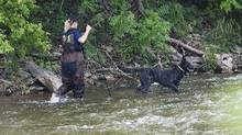 A police search dog searches the banks of the Credit River in Hewick Meadows Park in Mississauga, Ont., after police discovered a female head on Aug. 16, 2012. (Aaron Vincent Elkaim/The Canadian Press)